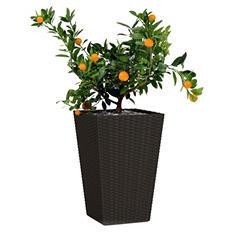 Keter Rattan Planter