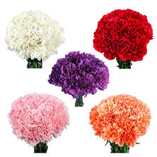 Carnations, Assorted (300 stems)