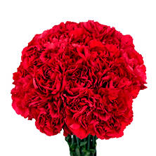 Carnations - Red - 150 Stems