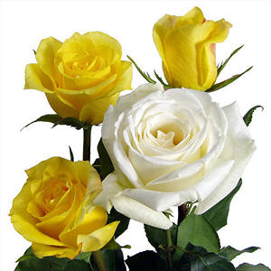 Wedding Pack - Yellow & White Roses (100 stems)