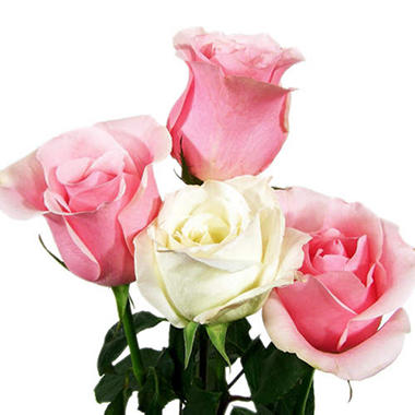 Wedding Pack - Pink & White Roses (100 stems)