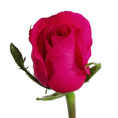 Roses - Hot Pink - 125 Stems