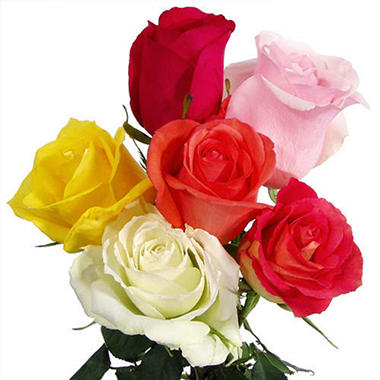 Roses - Growers Assorted (125 stems)