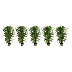 Faux Ficus Trees in Ceramic Containers (Set of 5)