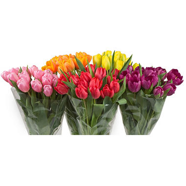 Tulips - 15 Stems