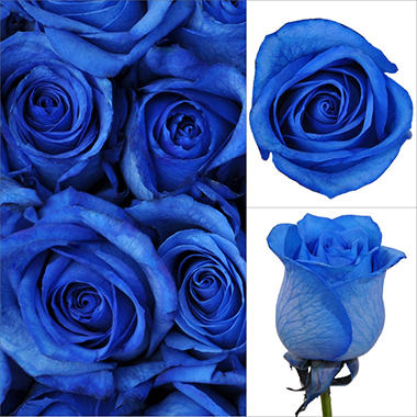 Roses - Blue - 100 Stems