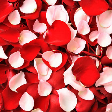 Rose Petals - Red and Pink