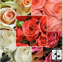 Fair Trade Roses - Assorted Colors - 60 Stems