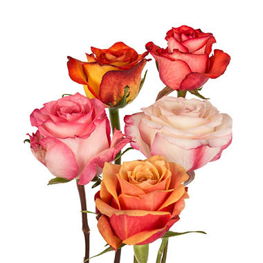 Roses - Assorted Bicolor - 125 Stems