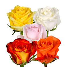 Roses - Assorted - 125 Stems