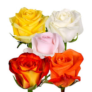 Roses - Assorted (125 stems)