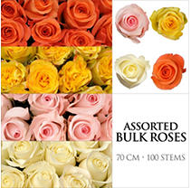 Roses - Assorted Colors - 100 Stems