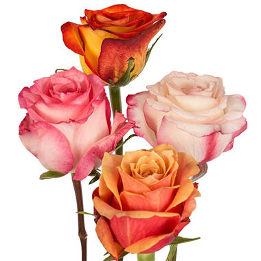 Roses - Assorted Bicolor - 100 Stems