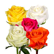 Roses - Assorted Colors (125 stems)