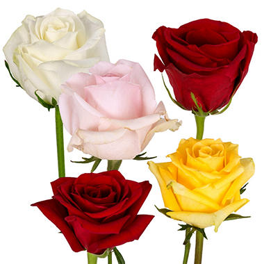 Roses - Red and Assorted Colors - 125 Stems