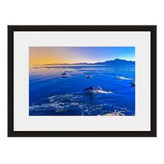 Framed Fine Art Photography - Dancing Dolphins By Blaine Harrington