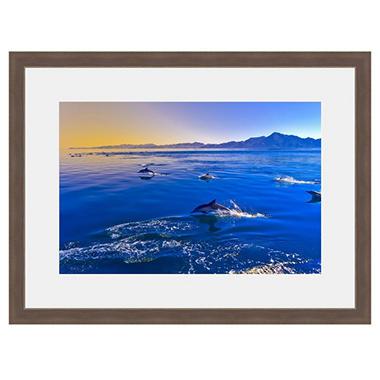 Framed Fine Art Photography Dancing Dolphins  BHDAS1015BBWEPW