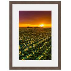 Framed Fine Art Photography - Sunflower Sunset Parade By Blaine Harrington