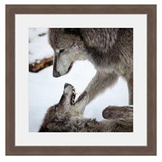 Framed Fine Art Photography - Wolves at Play by Keren Lynn