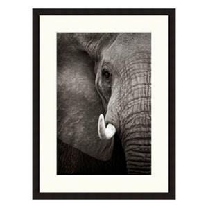 Framed Fine Art Photography - Elephant Tusk by Andy Biggs