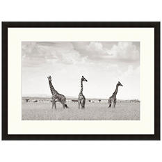 Framed Fine Art Photography - Three Giraffes by Andy Biggs