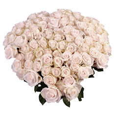 Vendela Roses with 6 cm Blooms (96 stems)