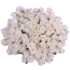 White Roses with 6 cm Blooms (96 stems)