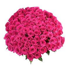 Hot Pink Roses with 6 cm Blooms (96 stems)