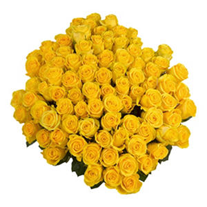 Yellow Roses with 6 cm Blooms (96 stems)