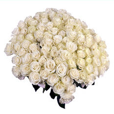 Mondail White Roses with 6 cm Blooms (96 stems)