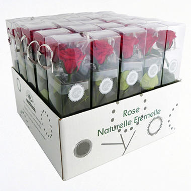 Premium Preserved Mini Amorosa Single Stem Rose - Red - 25 Stems