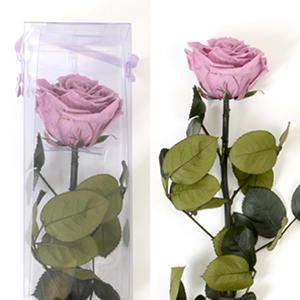 Premium Preserved Amorosa Single Stem Rose - Lavender - 1 each