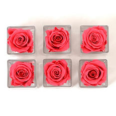 Preserved Rose Heads in Votives - Hot Pink - 6 pk