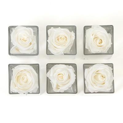 Preserved Rose Heads in Votives - White - 6 pk