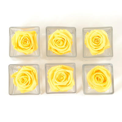 Preserved Rose Heads in Votives - Yellow - 6 pk