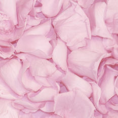 Preserved Rose Petals - Light Pink - 8600 petals
