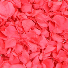 Preserved Rose Petals - Hot Pink - 8600 petals