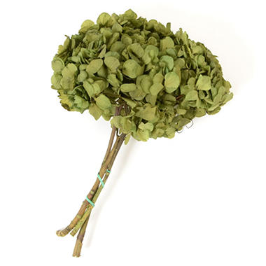 Preserved Hydrangeas - Natural Green - 45 Stems