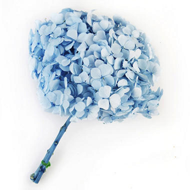 Preserved Hydrangeas - Light Blue - 45 Stems
