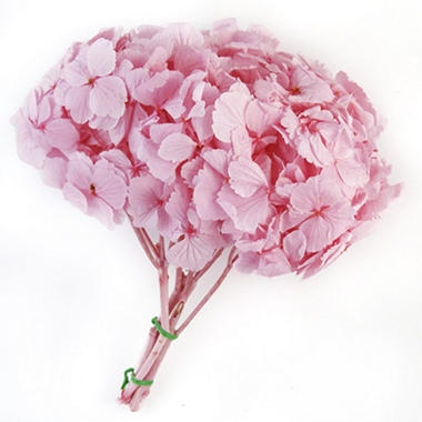 Preserved Hydrangeas - Light Pink - 45 Stems