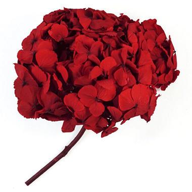 Preserved Hydrangeas - Red - 45 Stems