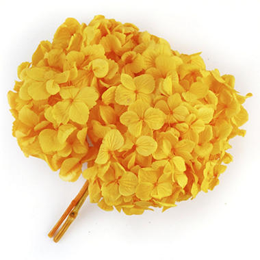 Preserved Hydrangeas - Yellow - 45 Stems