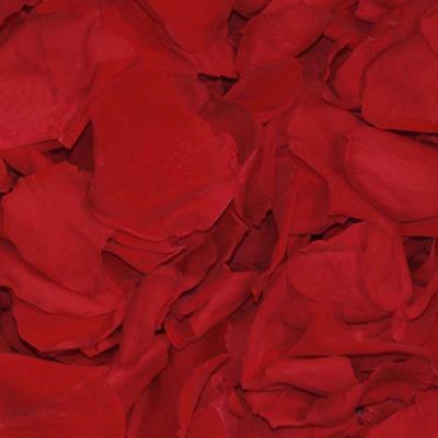 Preserved Rose Petals - Red - 8600 petals