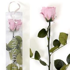 Standard Preserved Amorosa Rose - Lavender - 1 each