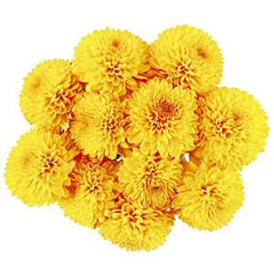 Yellow Bon Bon Disbuds (60 stems)