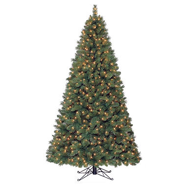 7' Camden Fir Pre-lit Quick Set® Tree