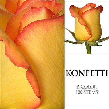 Roses - Konfetti - 100 Stems