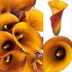 Mini Calla Lily - Orange - 100 Stems