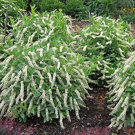 (10-Qt) Premium Sweetspire Pot - Southwestern Gardening