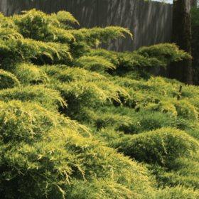 (10-Qt) Juniper Pot - Northeast Gardening